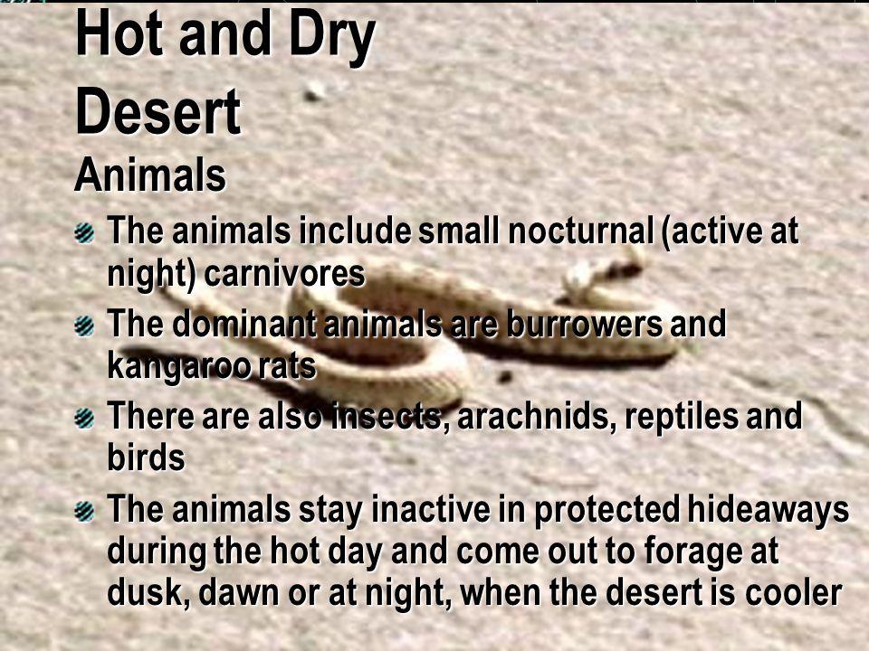 Hot and Dry Desert Animals