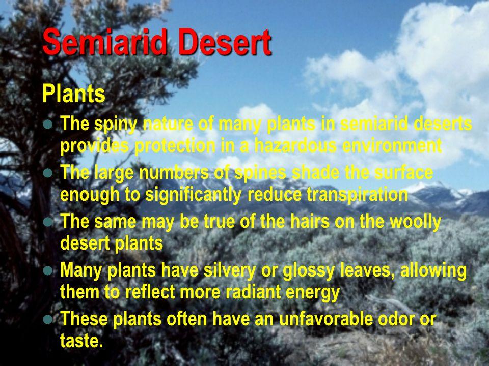 Semiarid Desert Plants
