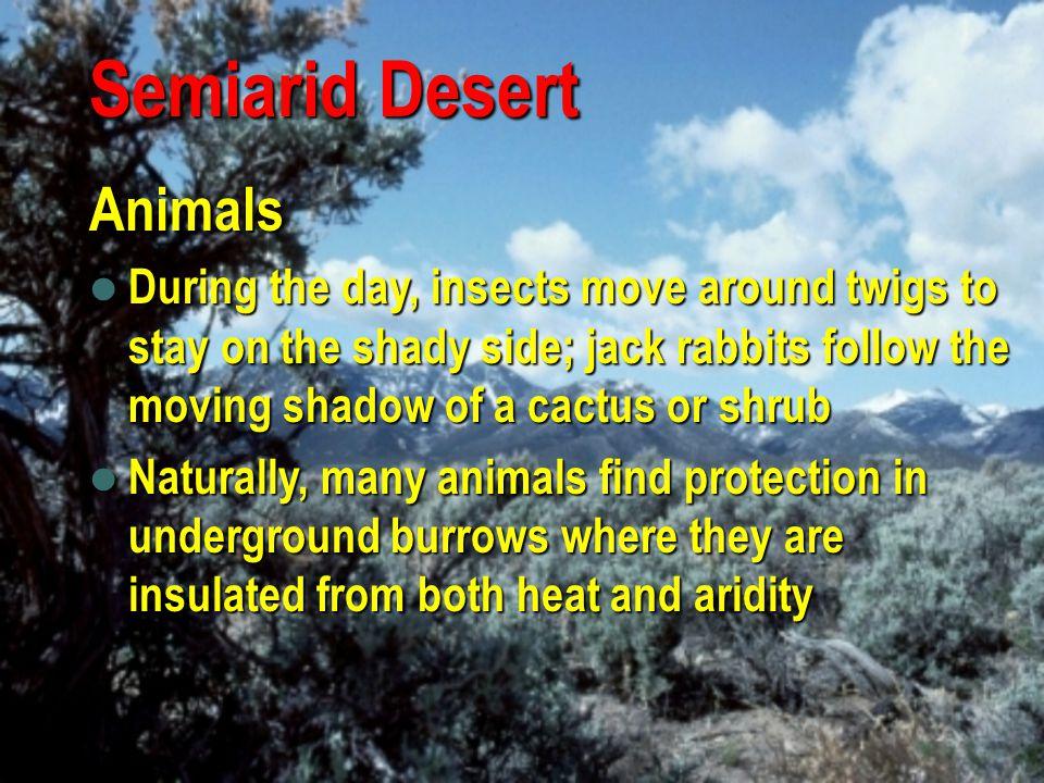 Semiarid Desert Animals