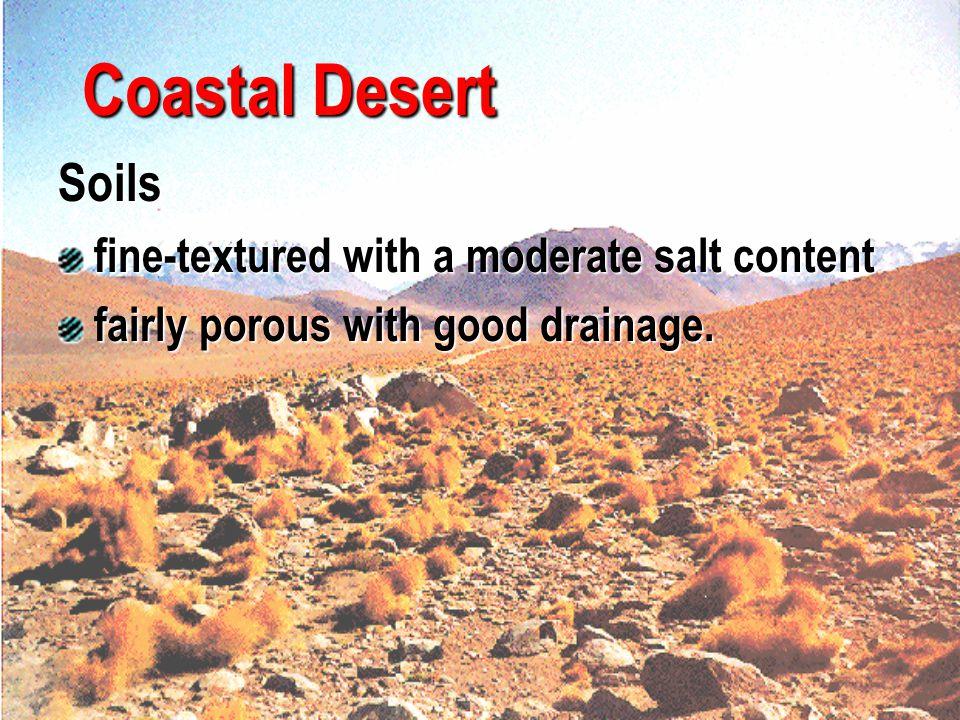 Coastal Desert Soils fine-textured with a moderate salt content