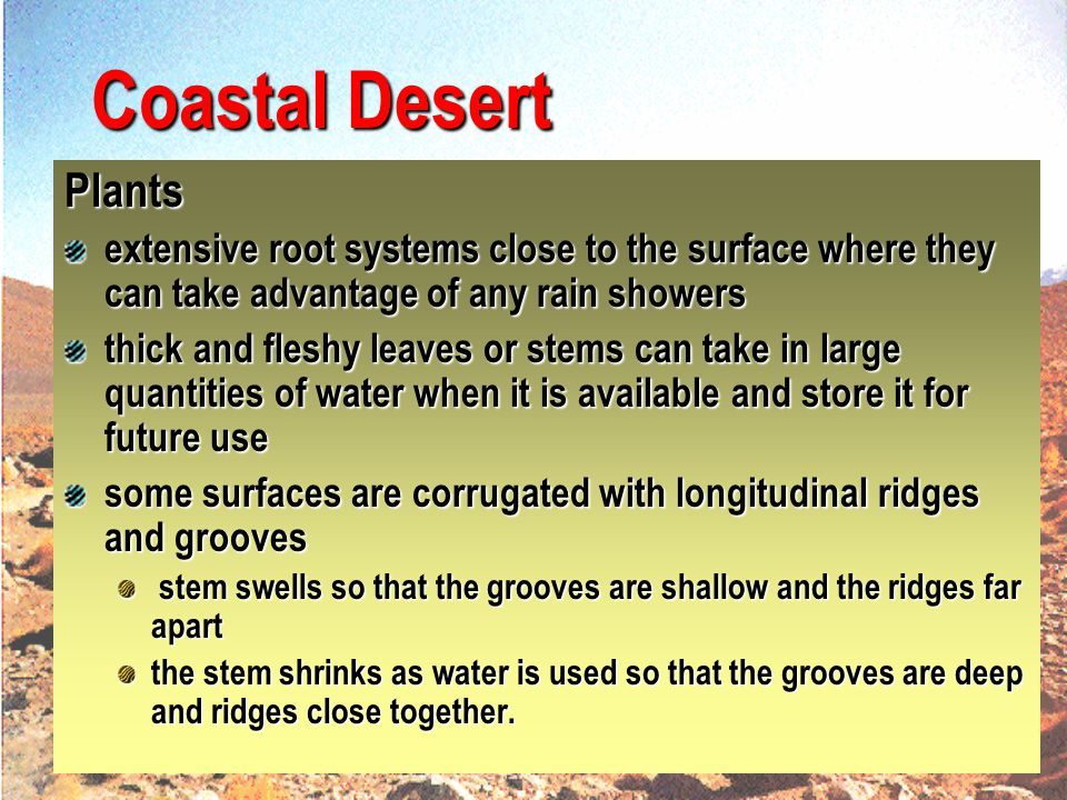 Coastal Desert Plants. extensive root systems close to the surface where they can take advantage of any rain showers.