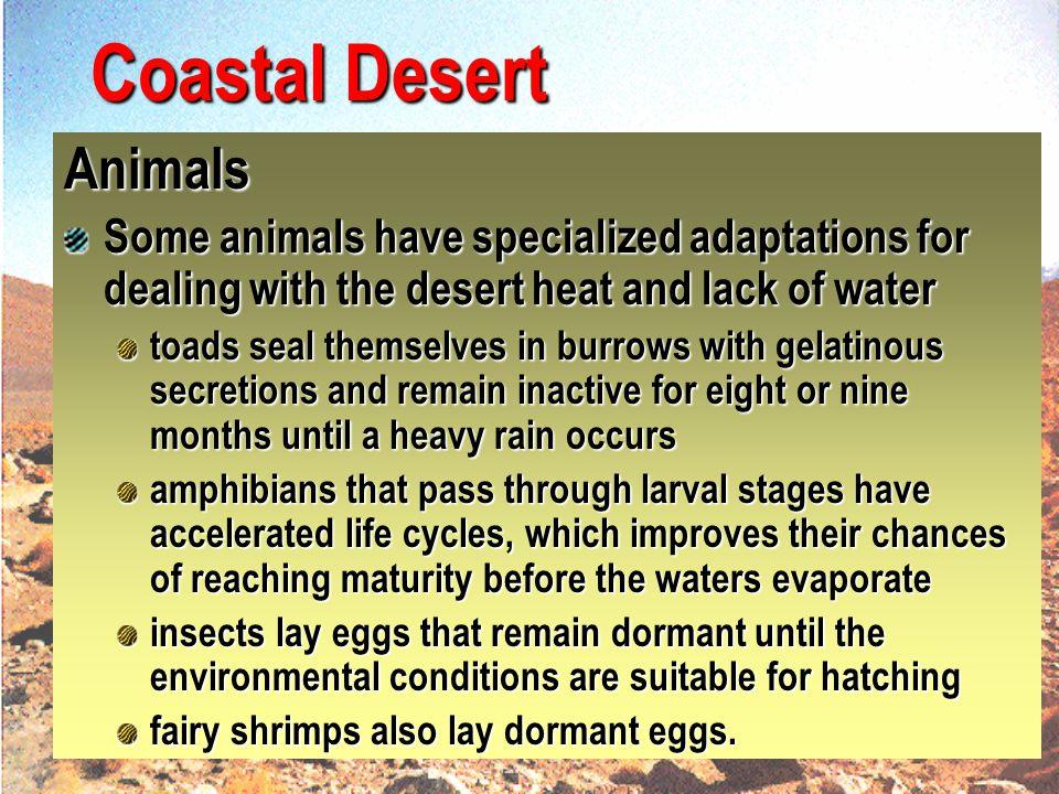 Coastal Desert Animals