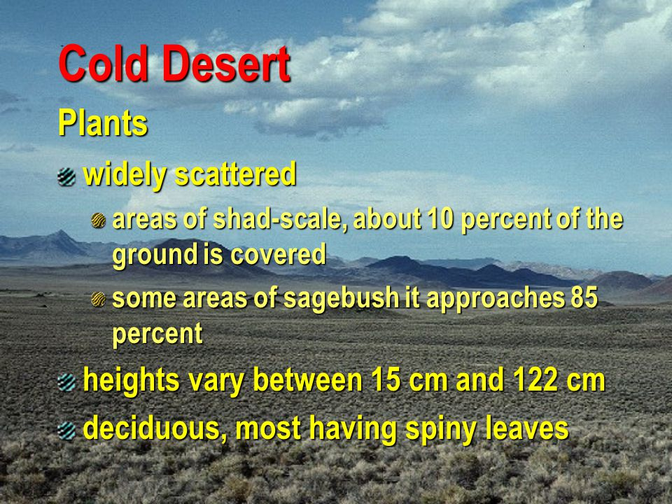 Cold Desert Plants widely scattered