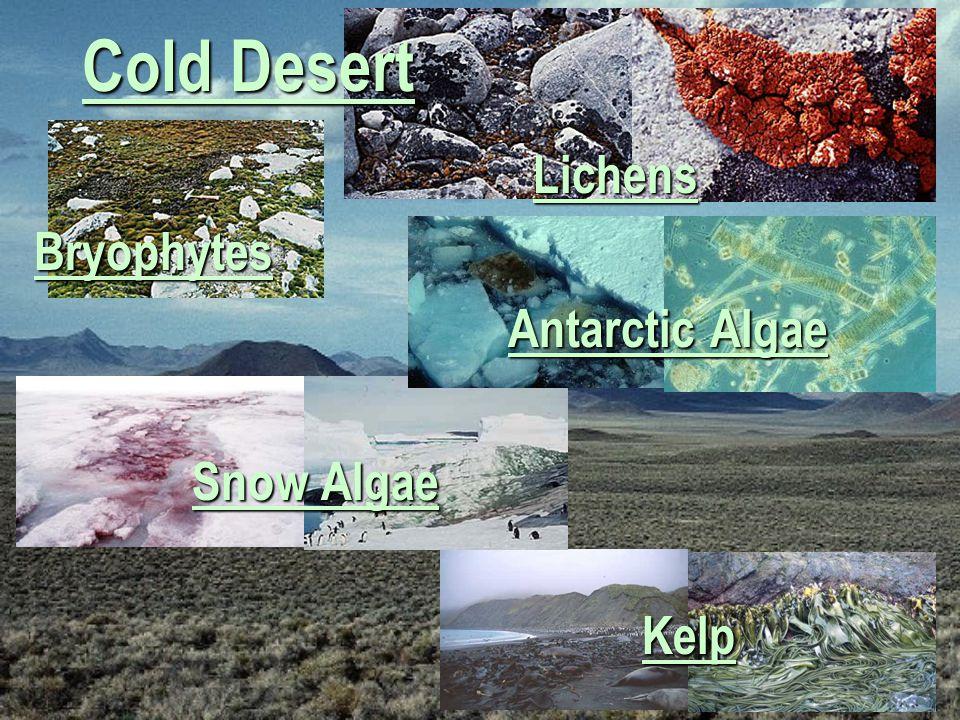 Cold Desert Lichens Bryophytes Antarctic Algae Snow Algae Kelp