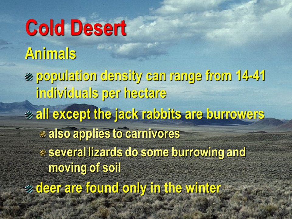 Cold Desert Animals. population density can range from 14-41 individuals per hectare. all except the jack rabbits are burrowers.