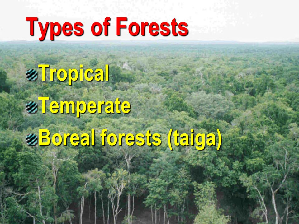 Types of Forests Tropical Temperate Boreal forests (taiga)