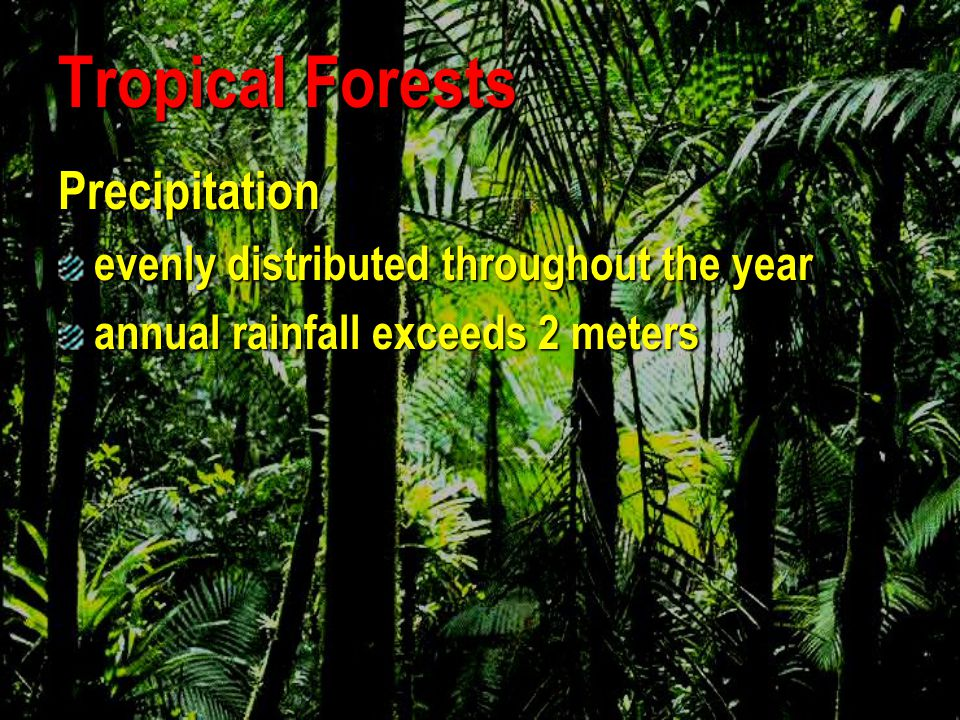 Tropical Forests Precipitation evenly distributed throughout the year