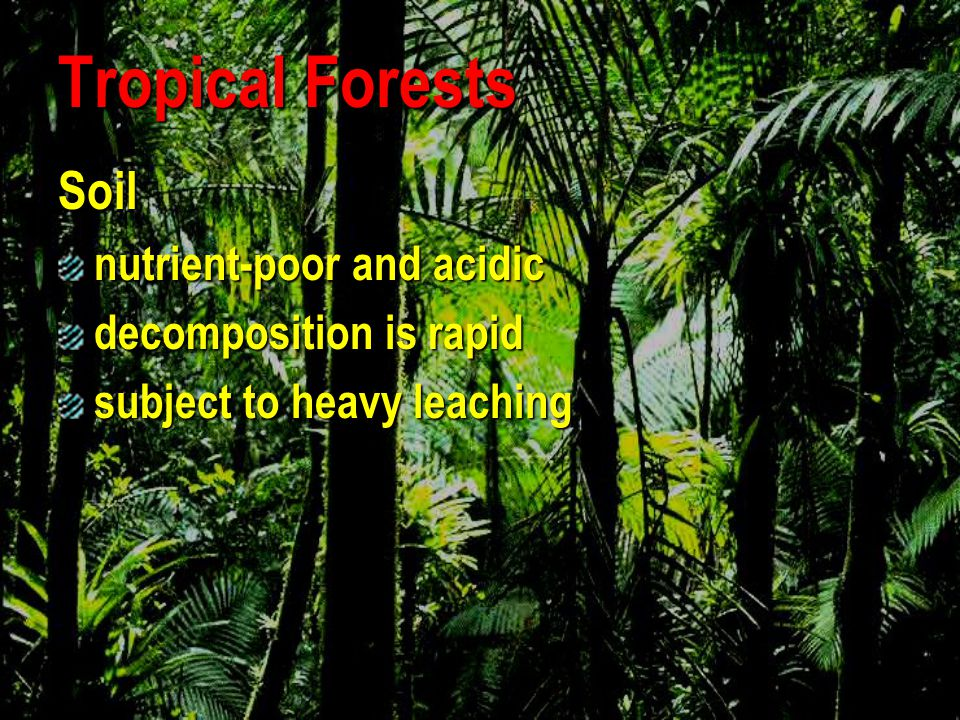 Tropical Forests Soil nutrient-poor and acidic decomposition is rapid