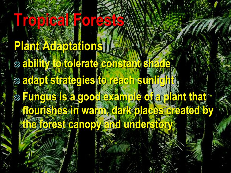Tropical Forests Plant Adaptations ability to tolerate constant shade