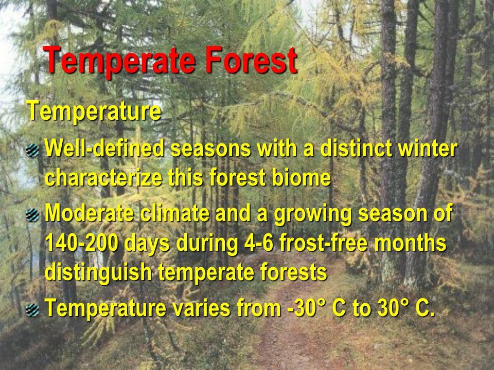 Temperate Forest Temperature