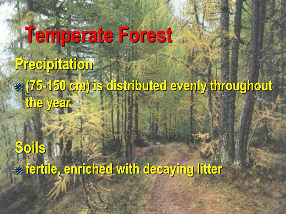 Temperate Forest Precipitation Soils