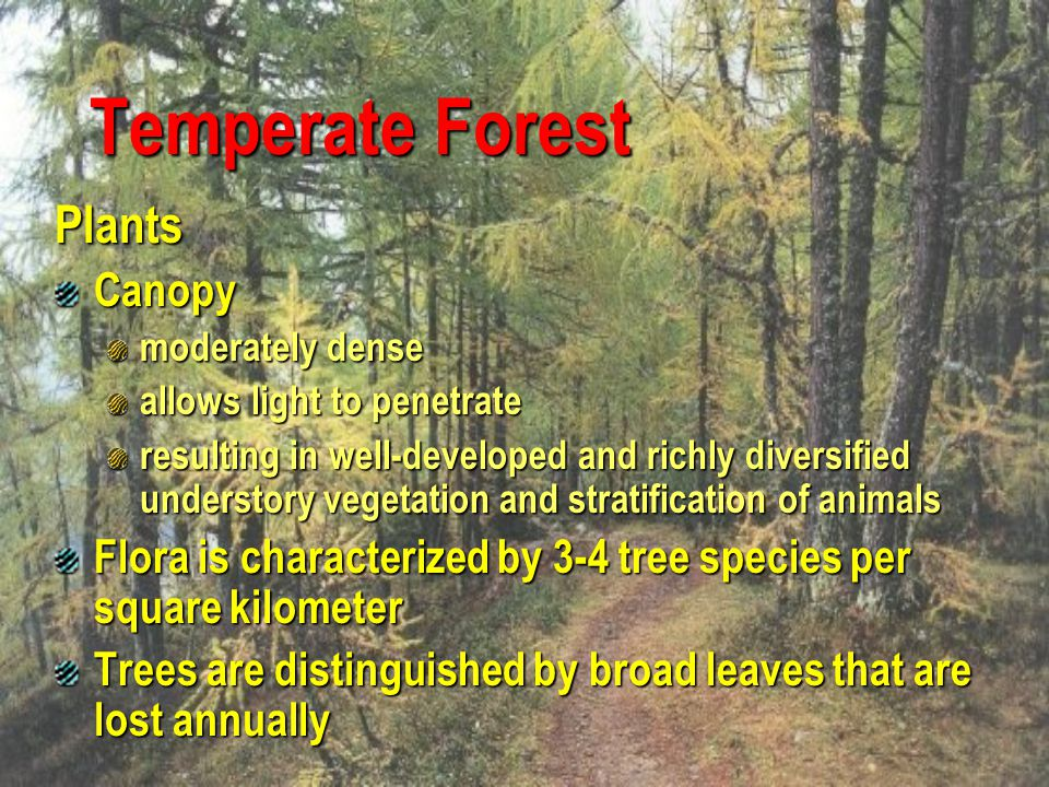Temperate Forest Plants Canopy