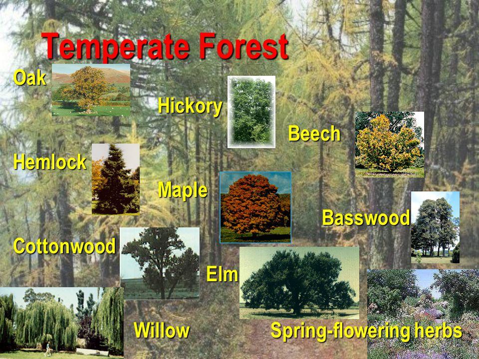 Temperate Forest Oak Hickory Beech Hemlock Maple Basswood Cottonwood