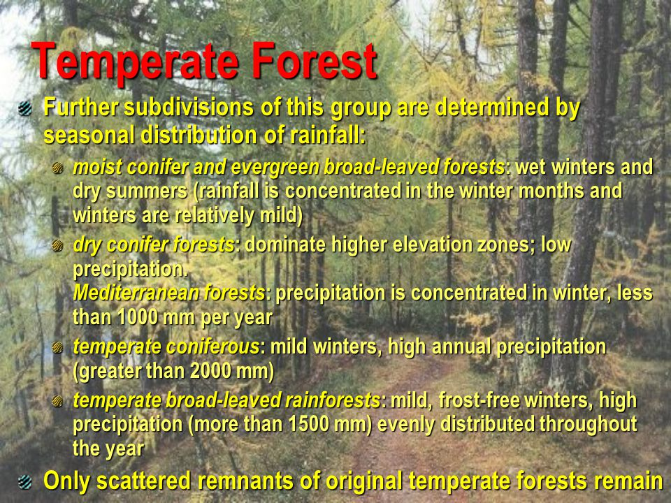 Temperate Forest Further subdivisions of this group are determined by seasonal distribution of rainfall: