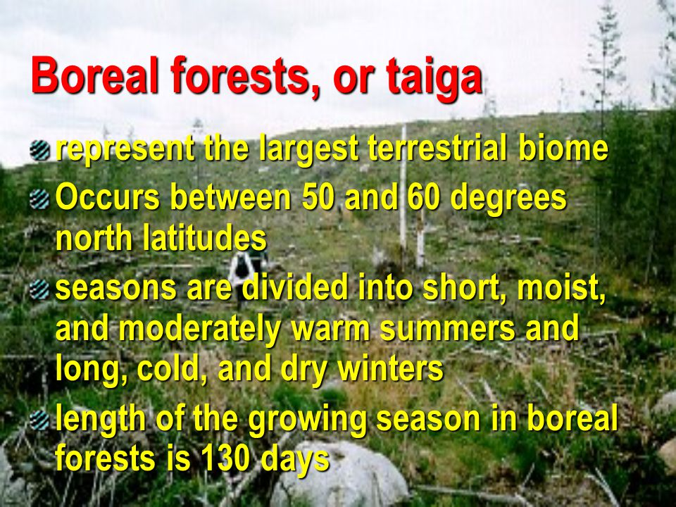 Boreal forests, or taiga