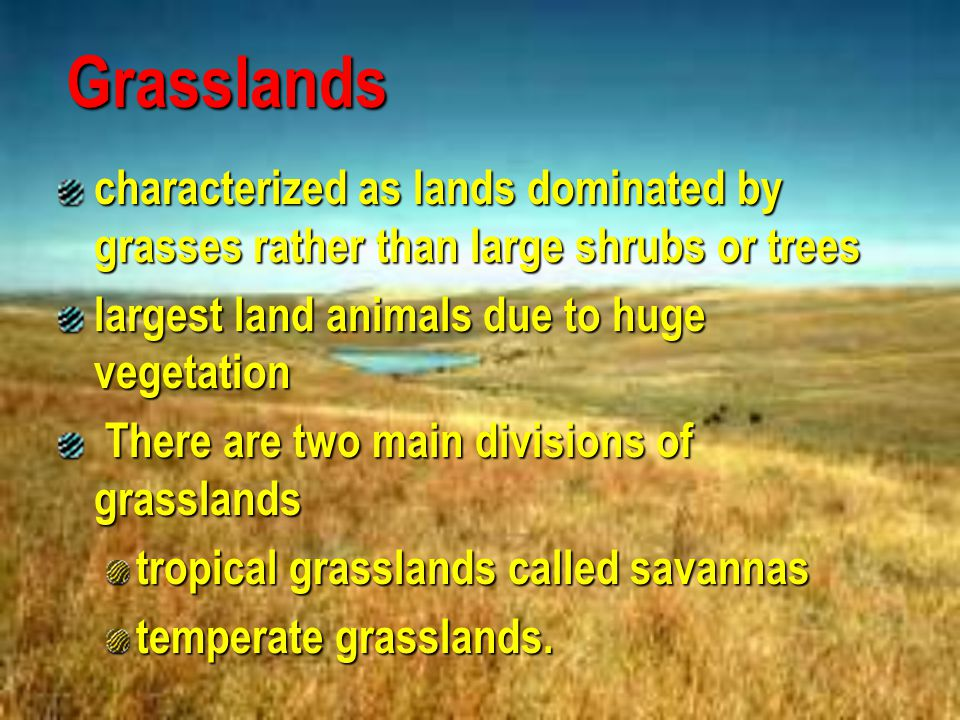 Grasslands characterized as lands dominated by grasses rather than large shrubs or trees. largest land animals due to huge vegetation.