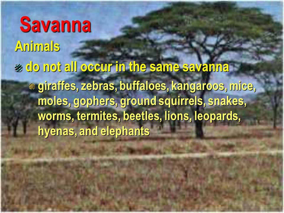 Savanna Animals do not all occur in the same savanna