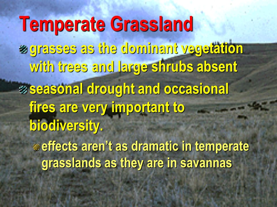 Temperate Grassland grasses as the dominant vegetation with trees and large shrubs absent.