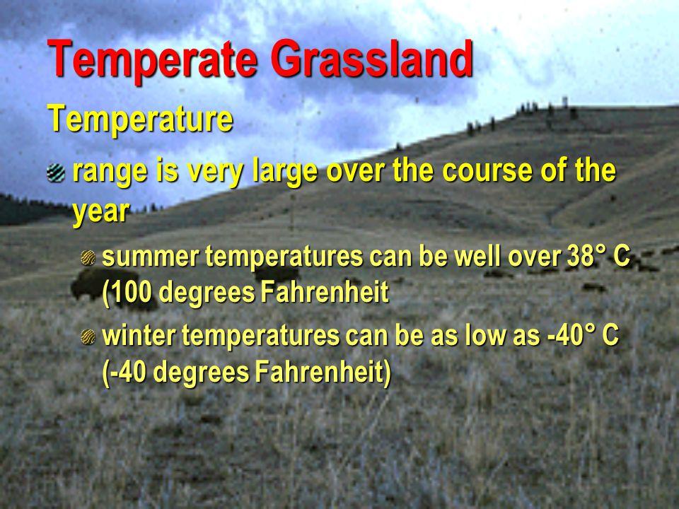Temperate Grassland Temperature