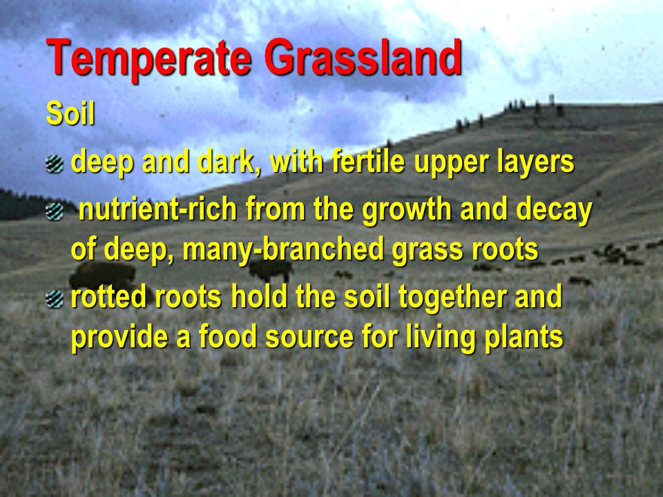 Temperate Grassland Soil deep and dark, with fertile upper layers