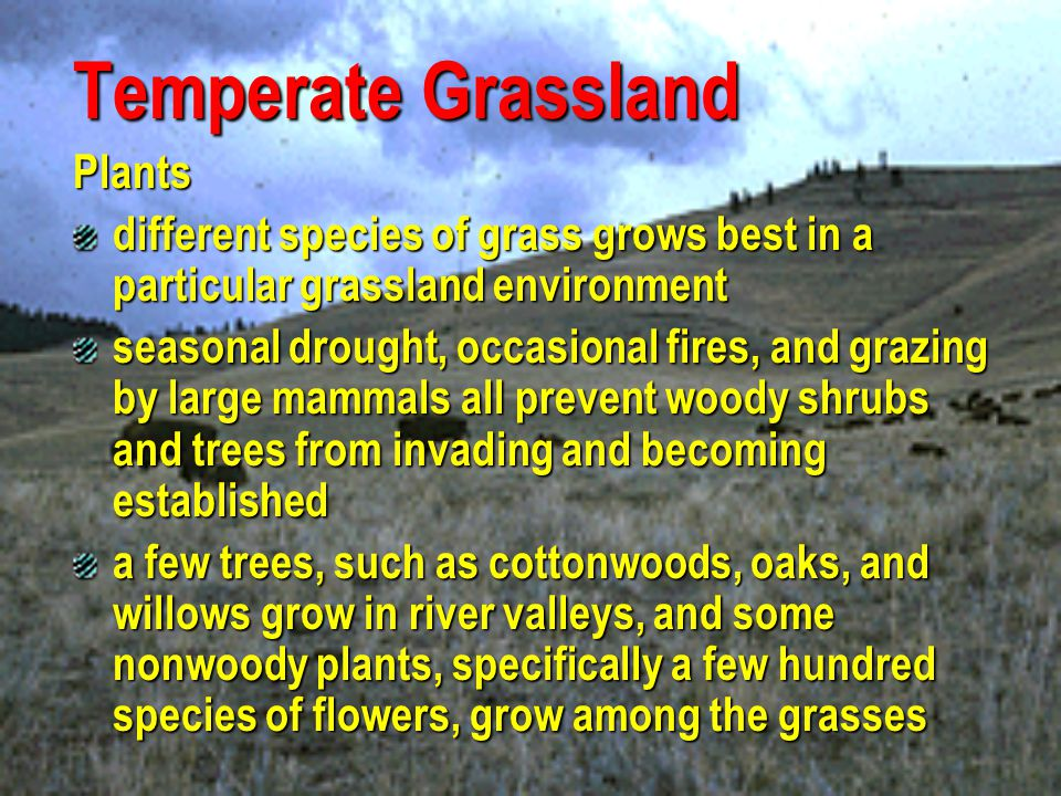 Temperate Grassland Plants