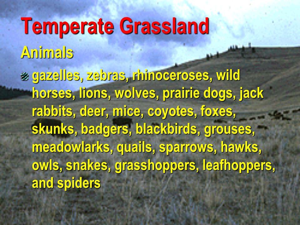 Temperate Grassland Animals