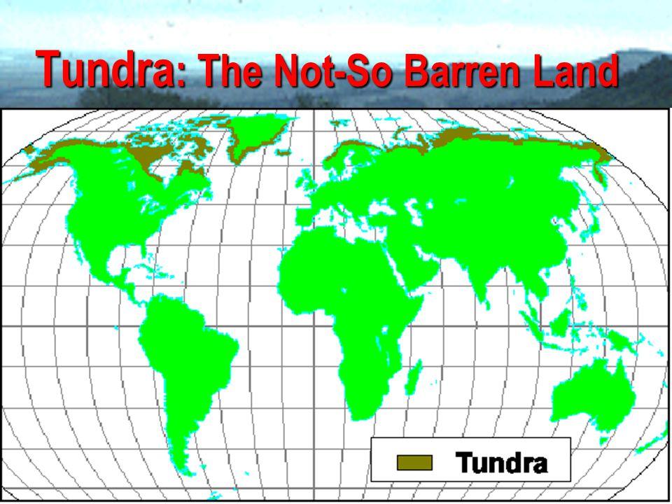 Tundra: The Not-So Barren Land