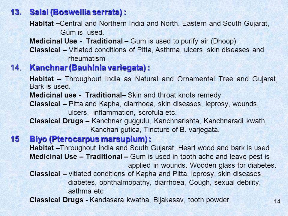 13. Salai (Boswellia serrata) :