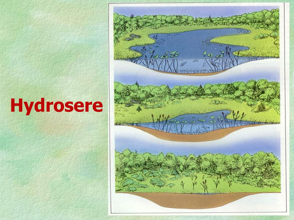 Hydrosere