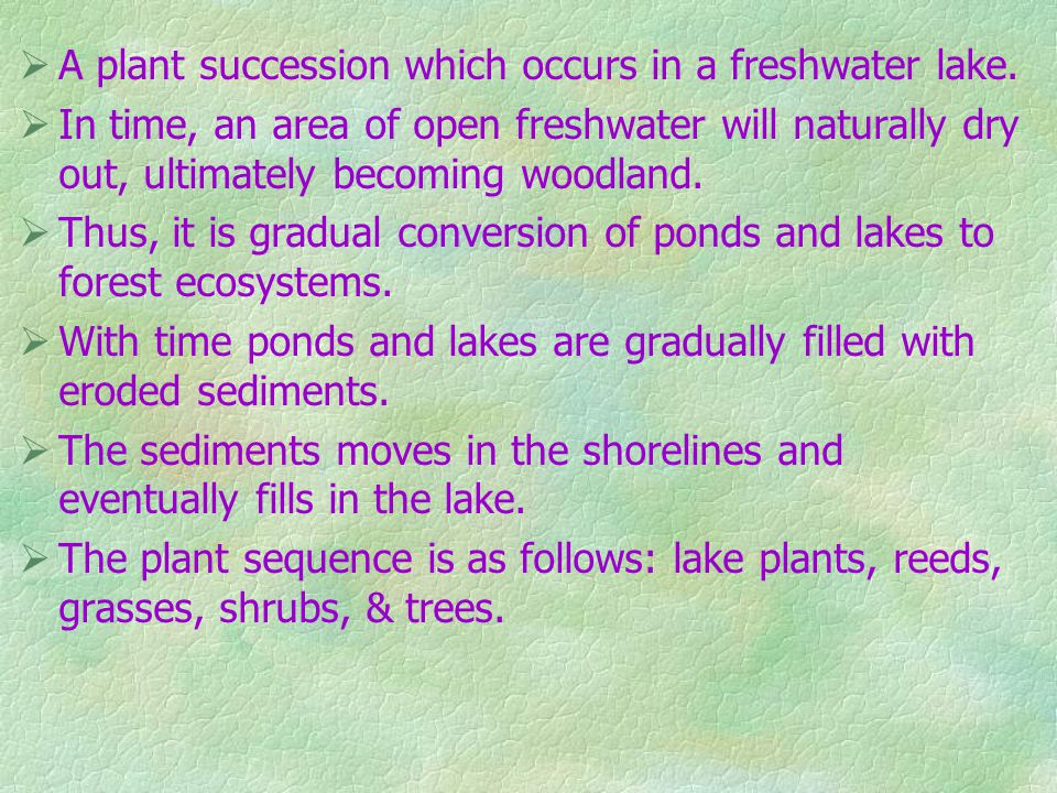 A plant succession which occurs in a freshwater lake.