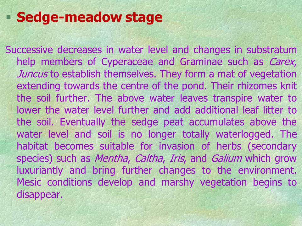 Sedge-meadow stage