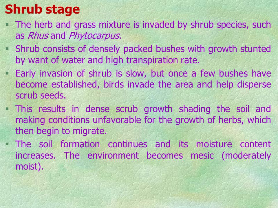 Shrub stage The herb and grass mixture is invaded by shrub species, such as Rhus and Phytocarpus.