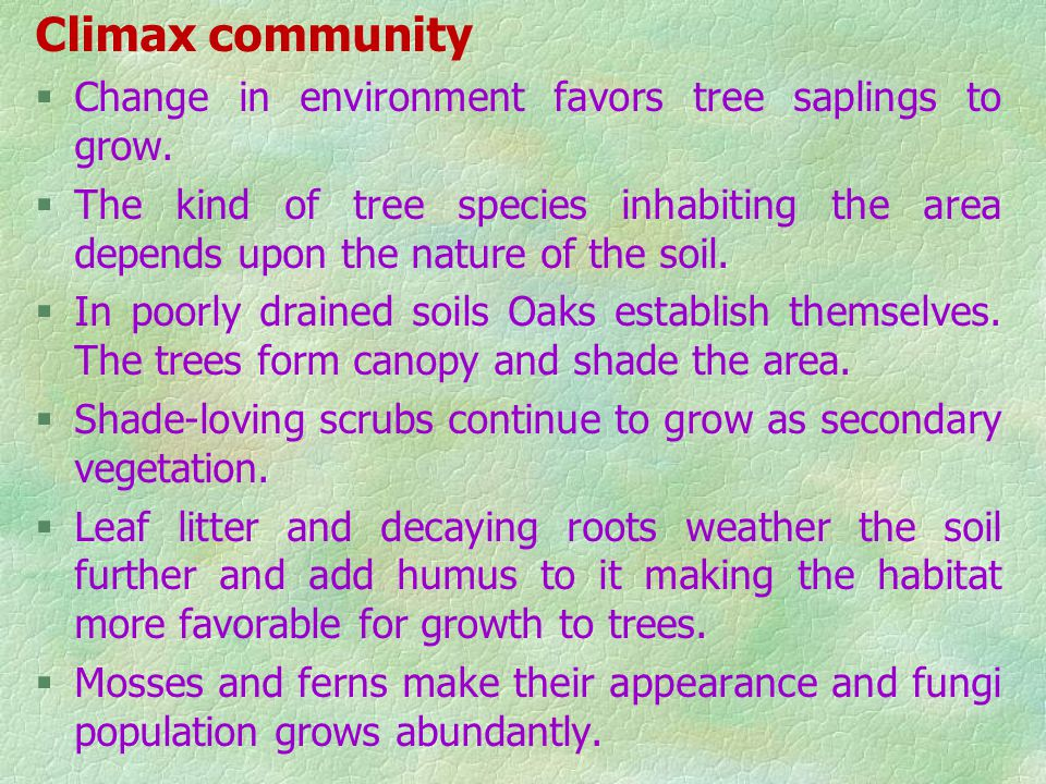 Climax community Change in environment favors tree saplings to grow.