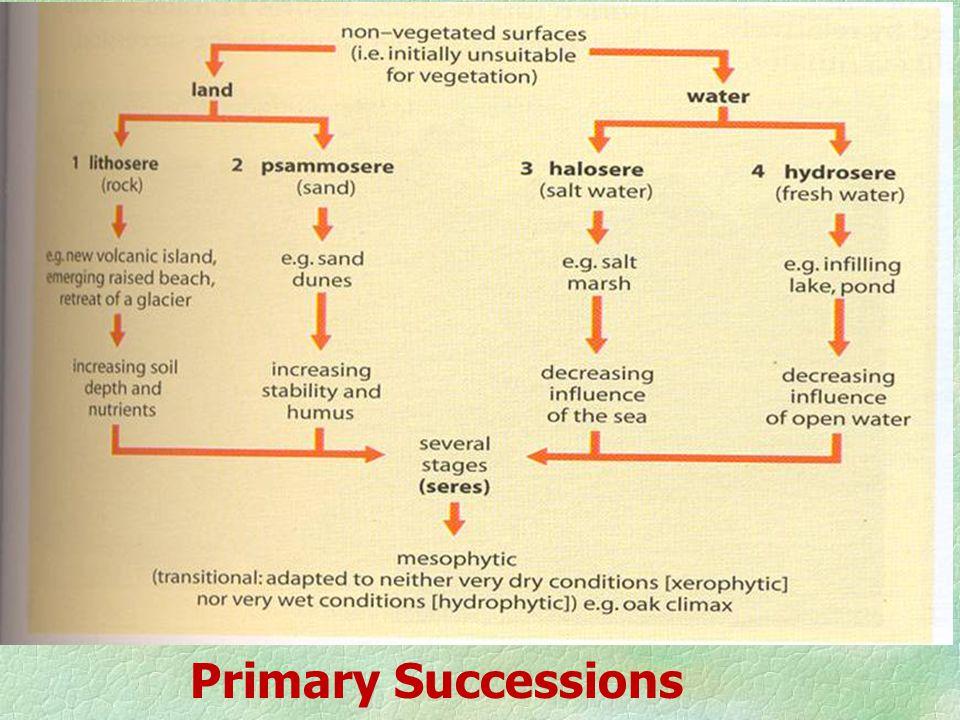 Primary Successions