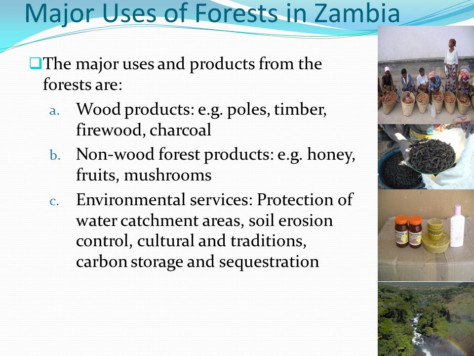 Major Uses of Forests in Zambia