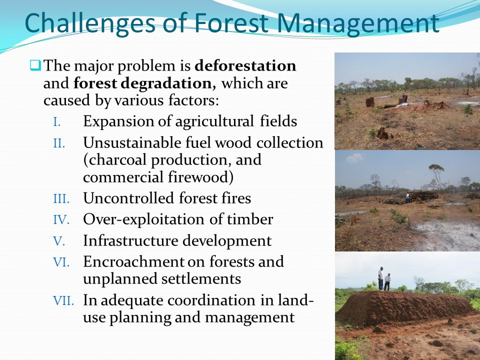Challenges of Forest Management