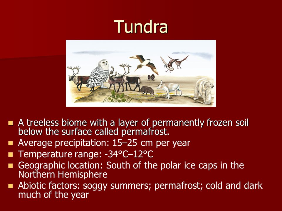 Tundra A treeless biome with a layer of permanently frozen soil below the surface called permafrost.