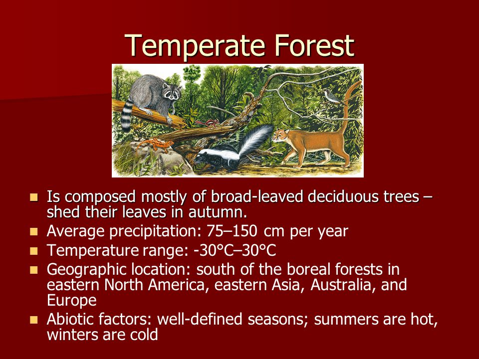 Temperate Forest Is composed mostly of broad-leaved deciduous trees –shed their leaves in autumn. Average precipitation: 75–150 cm per year.