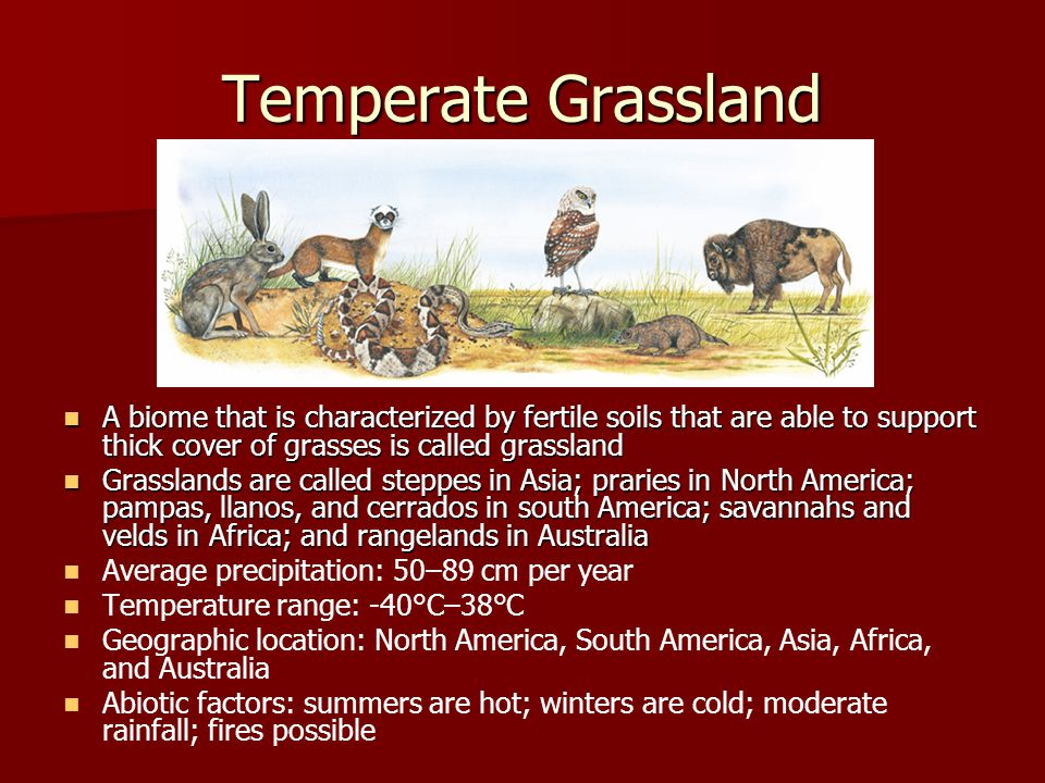 Temperate Grassland A biome that is characterized by fertile soils that are able to support thick cover of grasses is called grassland.