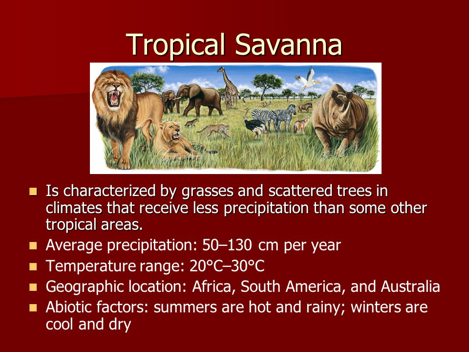 Tropical Savanna Is characterized by grasses and scattered trees in climates that receive less precipitation than some other tropical areas.