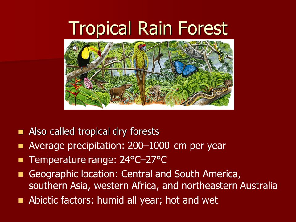 Tropical Rain Forest Also called tropical dry forests