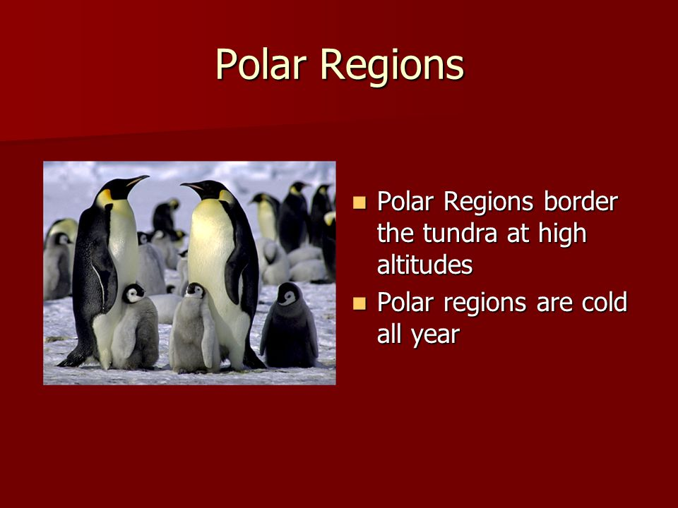 Polar Regions Polar Regions border the tundra at high altitudes