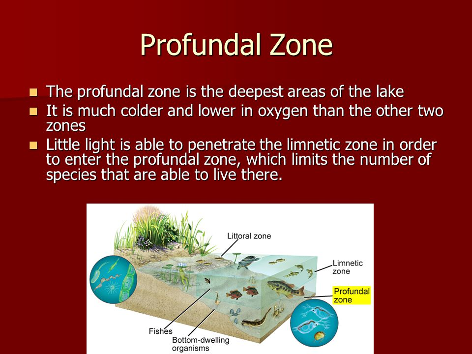Profundal Zone The profundal zone is the deepest areas of the lake