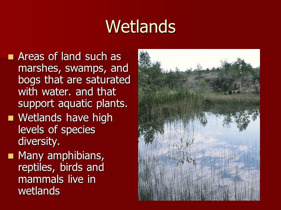 Wetlands Areas of land such as marshes, swamps, and bogs that are saturated with water. and that support aquatic plants.