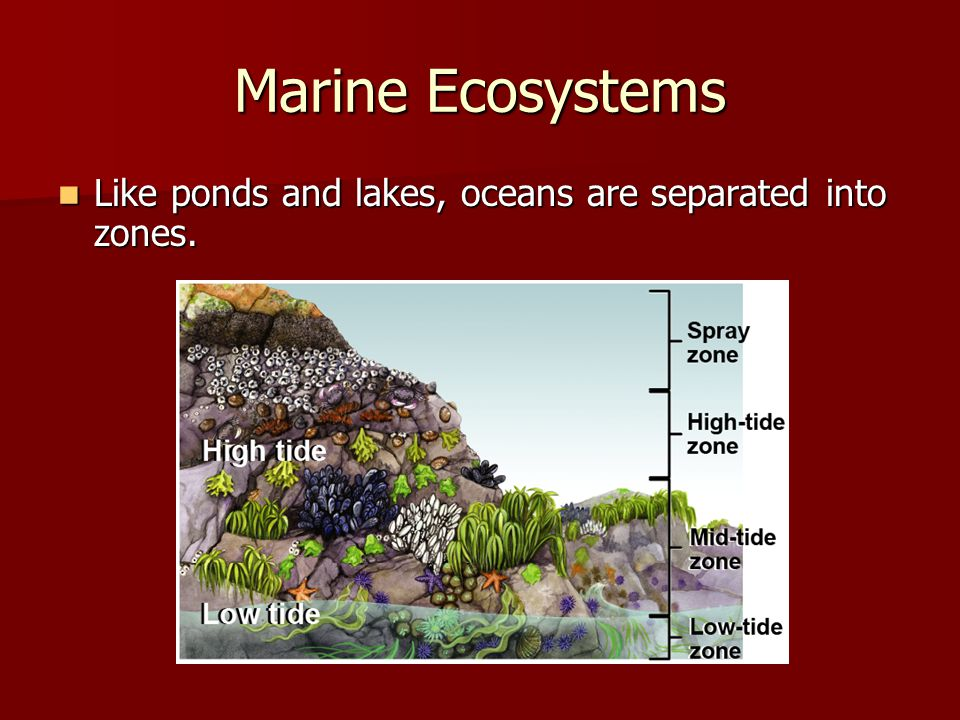 Marine Ecosystems Like ponds and lakes, oceans are separated into zones.