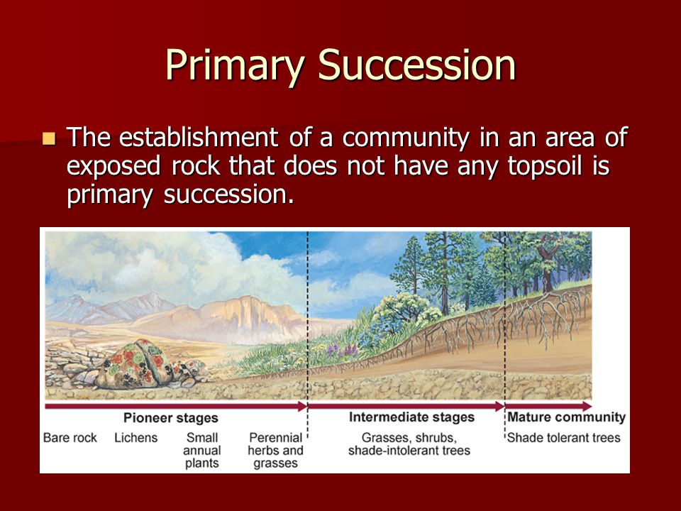 Primary Succession The establishment of a community in an area of exposed rock that does not have any topsoil is primary succession.