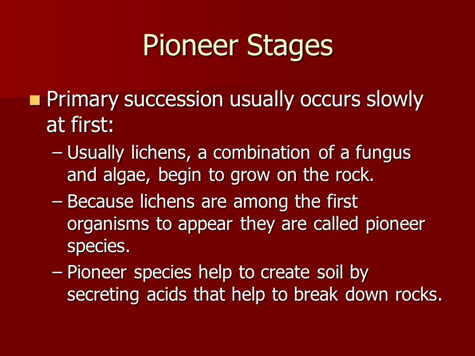 Pioneer Stages Primary succession usually occurs slowly at first: