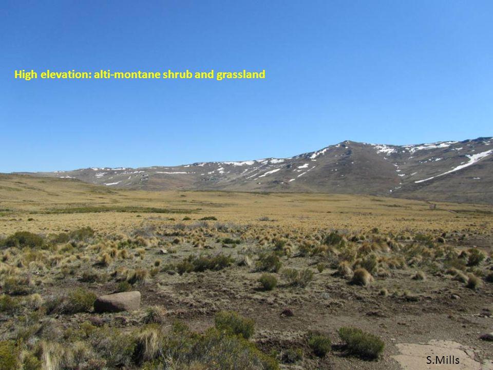 High elevation: alti-montane shrub and grassland