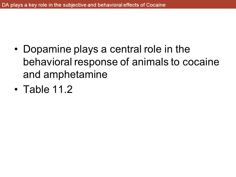DA plays a key role in the subjective and behavioral effects of Cocaine