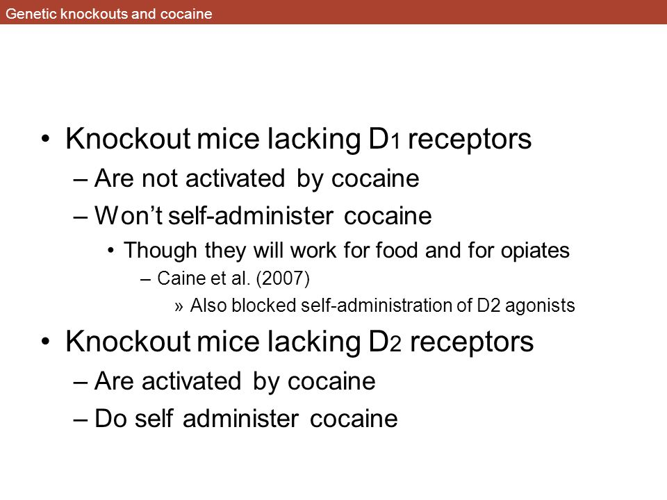 Genetic knockouts and cocaine